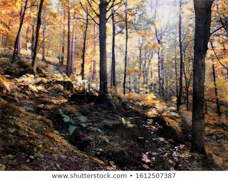 Woodland painting Stock photo © trgowanlock
