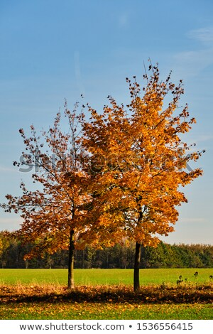 Under the two trees on the green sunny meadow stock photo © azjoma