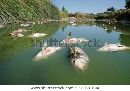 死んだ · 魚 · 生態学的な · 海 · にログイン - ストックフォト © pazham