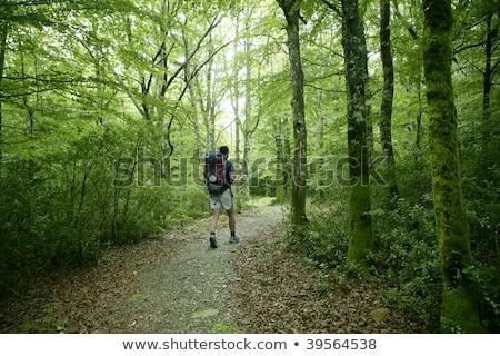 férfi · sétál · zöld · fű · erdő · zöld · nyár - stock fotó © lunamarina