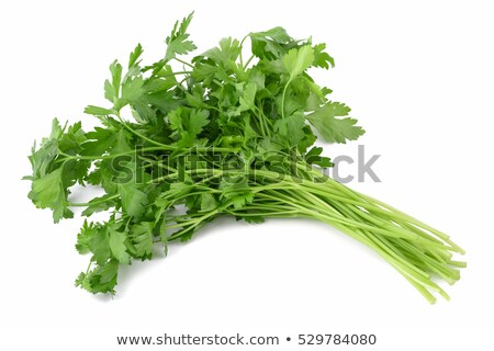 Parsley (Petroselinum crispum) Stock photo © Stocksnapper