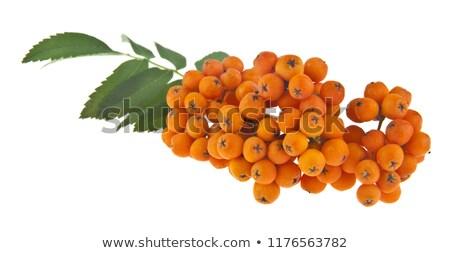オレンジ 液果類 夏 葉 美 緑 ストックフォト © Arrxxx