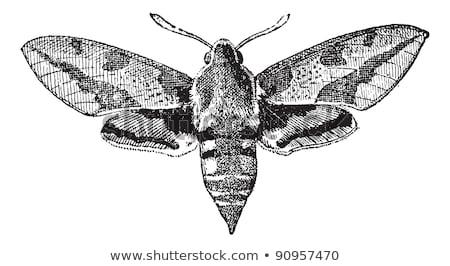 Old background with moth, vintage Stock photo © Elmiko