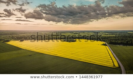 beautiful landscape with rape field and dramatic cloudscape stock photo © meinzahn
