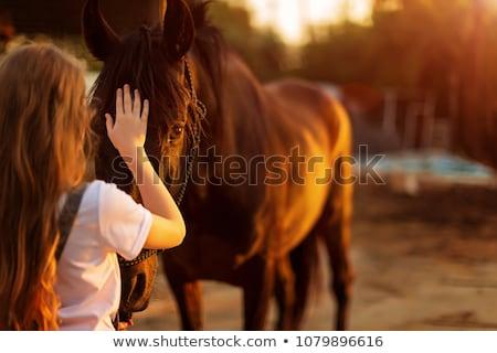 couple · cheval · poney · écurie · femme · homme - photo stock © konradbak