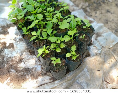 a sprout growing from pebbles  Stock photo © nalinratphi