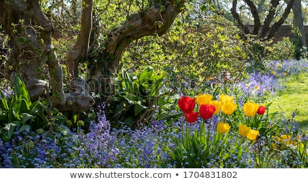 Spring bluebells in the garden Stock photo © Julietphotography