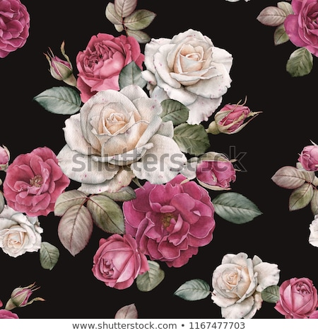 Fabric Rose on Black stock photo © kimmit