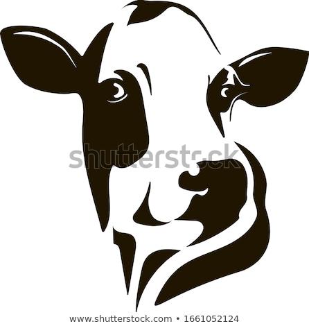 Head of a Holstein Cow Stock photo © rhamm