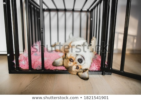 Dog in the kennel Stock photo © adrenalina