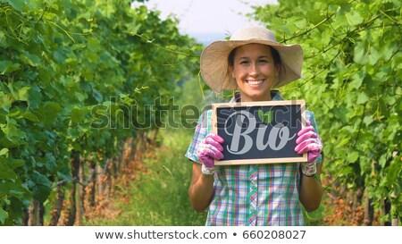 lousa · orgânico · vinho · assinar · folhas · frutas - foto stock © Zerbor
