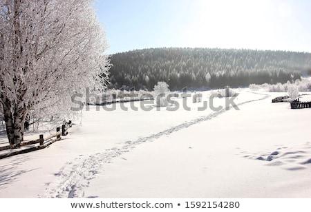 Сток-фото: заморожены · пути · озеро · Германия · зима · древесины