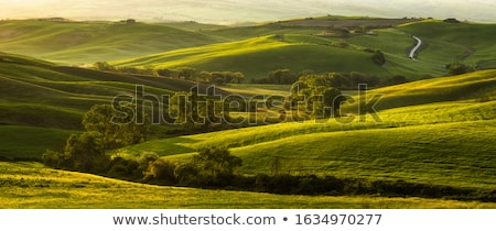 Tuscany dawn Stock photo © Dar1930