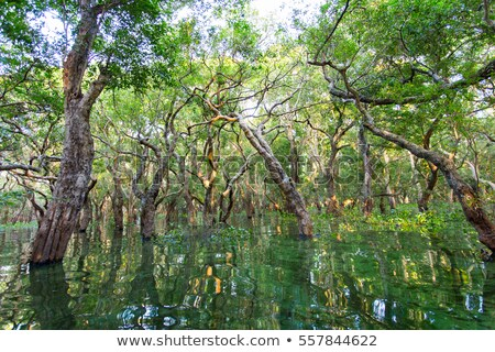 flooded trees in Cambodia Stock photo © prill