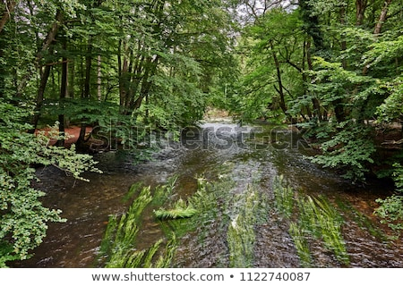 beautiful river wuerm in munich stock photo © meinzahn