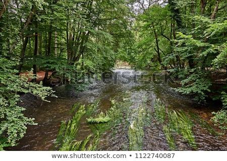beautiful river Wuerm in Munich Stock photo © meinzahn