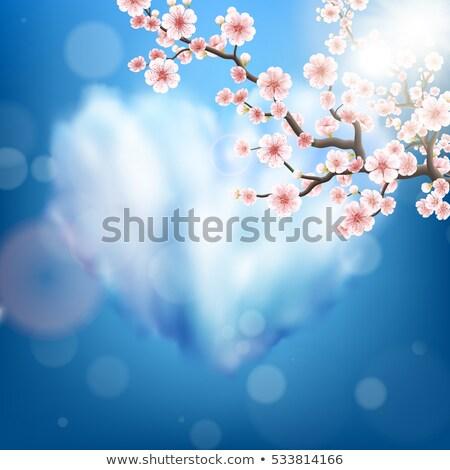rózsaszín · sakura · zuhan · szirmok · eps · 10 - stock fotó © beholdereye