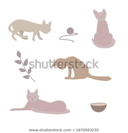 Komik stilize karikatür gri kedi farklı Stok fotoğraf © pcanzo