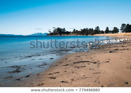 Strand stad tasmanië mooie water Stockfoto © artistrobd