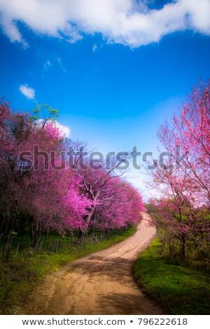 Tayland pembe sakura çiçek bahar sevmek Stok fotoğraf © scenery1