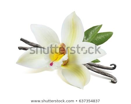 Wanilia Stick kwiaty bieli tła cynamonu żywności Zdjęcia stock © Masha