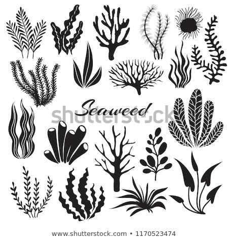 Stock photo: Aquarium Plant Decoration Vector Illustration