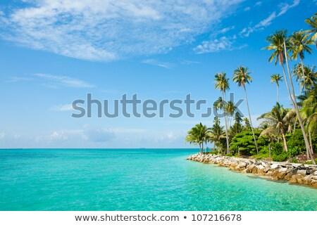 Tropical Caribbean Palapas hut coconut palm trees stock photo © lunamarina