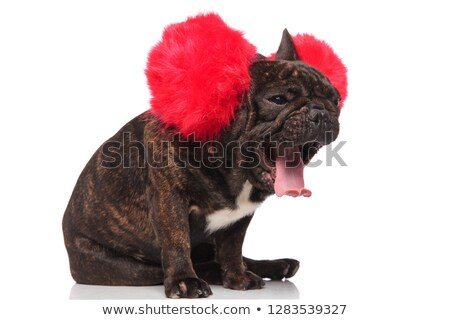 side view of funny french bulldog wearing big earmuffs yawning Stock photo © feedough