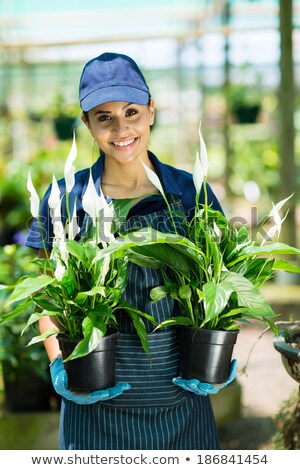 Pretty young woman working in a greenhouse Stock photo © deandrobot