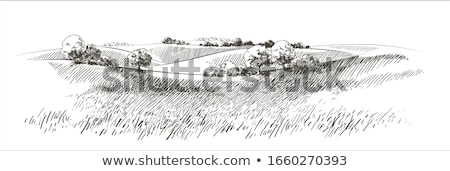 Grassland Stock photo © colematt