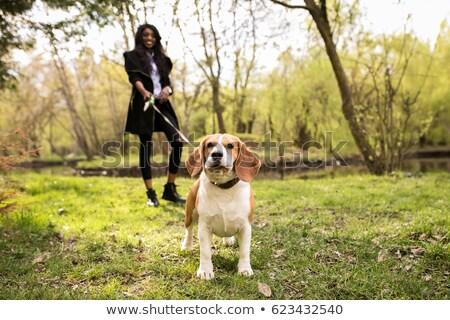 Winkelen vrouw lopen huisdier riem familie Stockfoto © robuart