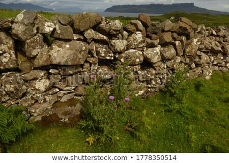 dry stone wall in Scotland Stock photo © prill