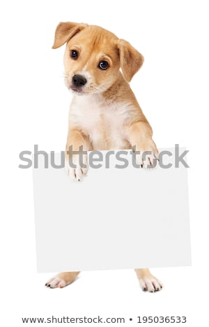 I beg you to a board Stock photo © OleksandrO