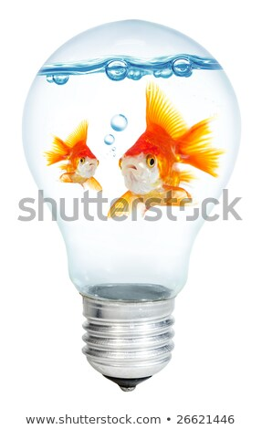 gold small fish in light bulb on a white background stock photo © ozaiachin