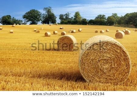 hooi · landschap · frans · hemel · zomer · veld - stockfoto © bigjohn36