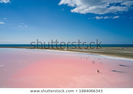 salt clusters on dead sea shore stock photo © eldadcarin