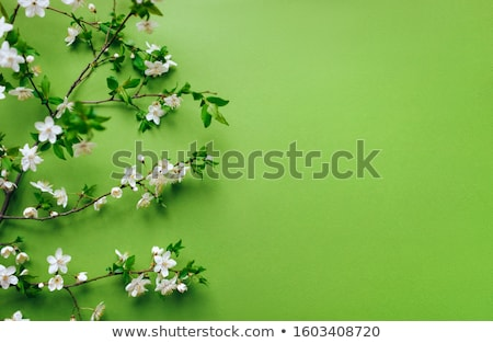 Spring mood Stock photo © pressmaster