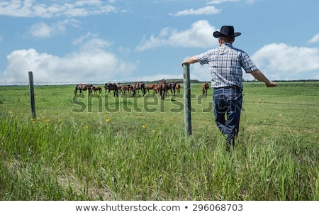 Green meadow with wired rural fence Stock photo © lunamarina