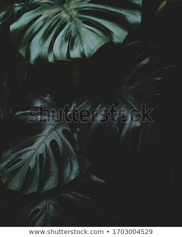 Close Up Of Green Leaves Stock photo © ryhor