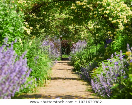 País jardim inglês verão flores paisagem Foto stock © trgowanlock