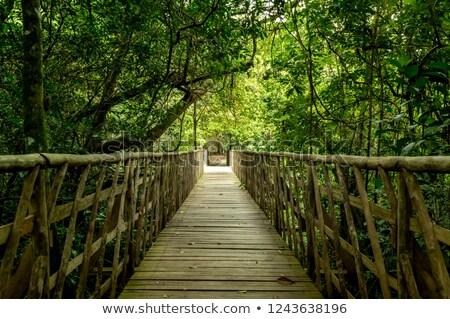 Wood Footbridge Stock photo © derocz