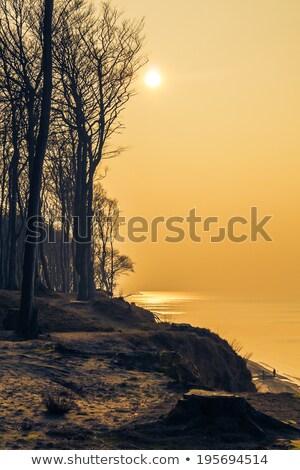Part Balti-tenger délután késő tavasz tenger Stock fotó © fotoaloja