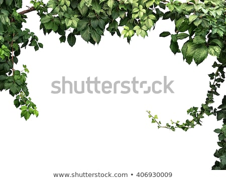 Hiedra marco pared naturales edad pared de ladrillo Foto stock © Taigi