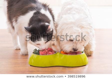 black cat eating meat  Stock photo © jonnysek