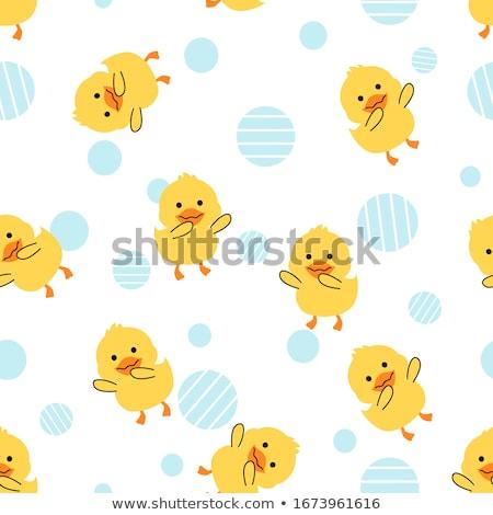 Joli canard oiseau Photo stock © chrisga