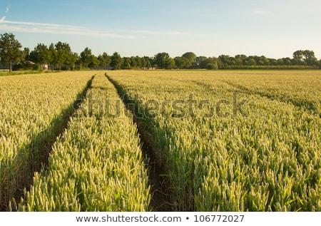 trator · campos · vegetal · horizonte · nuvens · roda - foto stock © phbcz