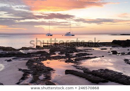 Káposzta fa tengerpart naplemente nap késő Stock fotó © lovleah