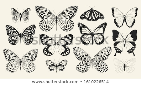 papillons · différent · silhouette · blanche · animaux - photo stock © laschi