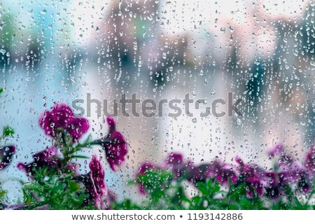 A window with flowers outside Stock photo © bluering