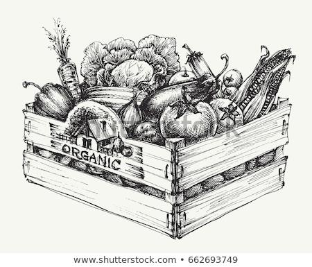 eco · farm · vettore · stile · design · set - foto d'archivio © robuart